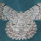 Mothly Angel by Joel Fourcard