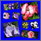 Flower Power Collage by BlueMoonRose