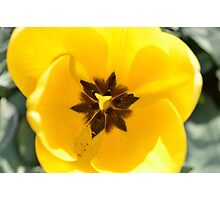 bright and yellow just like the sunshine! Photographic Print