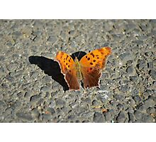 fragile like a butterfly Photographic Print