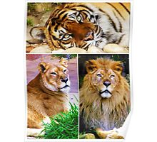 Lions & Tigers,Oh my! Poster