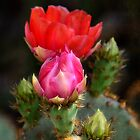 The Prickly Beauty by Saija  Lehtonen
