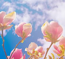 Spring by sarahcronkphoto