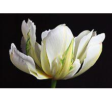 Spring Splendour Photographic Print