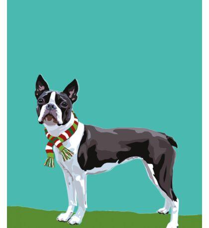 A Boston Terrier Winter Sticker