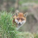 British Wildlife Centre by lutontown