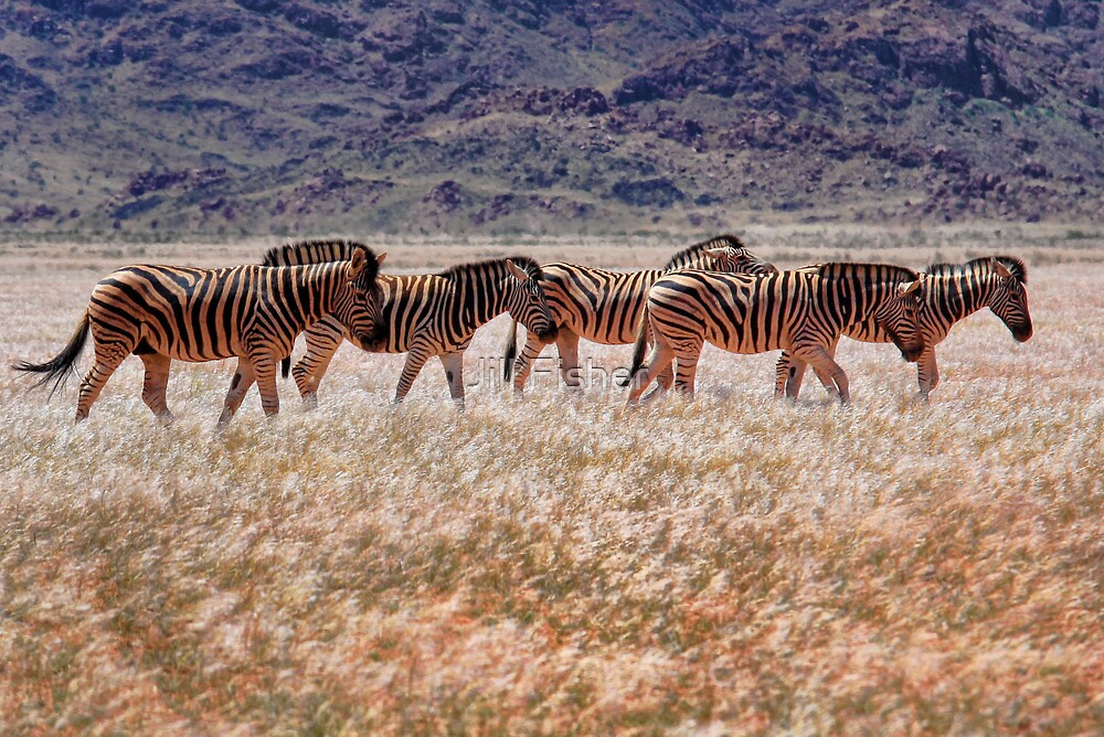 Mountain Zebras by Jill Fisher