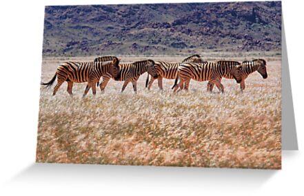 Mountain Zebras by Jill Fisher