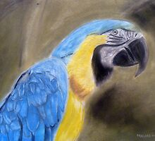 Blue Macaw Painting by Masaad Amoodi