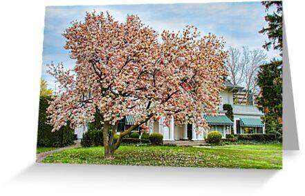 Magnolia Mansion by Marilyn Cornwell