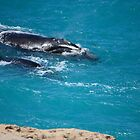 Southern Right Whale and her calf by LeonieRobertson