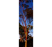 Painted tree Photographic Print