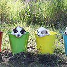 Buckets of Fun. by Annette Blattman