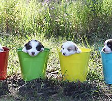 Buckets of Fun. by Annette Blattman