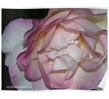 macro flora 014 Poster