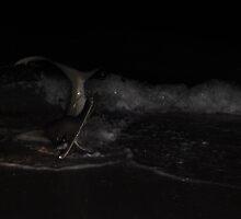 Hammerhead Shark by Kim McClain Gregal