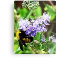 bumble bee on lavender Metal Print