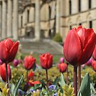 Spring time at Witley by Spencer Trickett