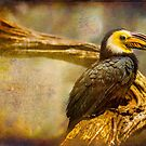 Finer Feathered Friends: Bushy Crested Hornbill by alan shapiro