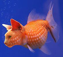 Catfish by RickHolmes