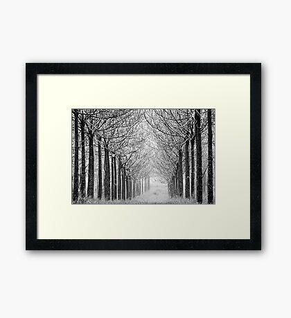 arranged in the fog Framed Print