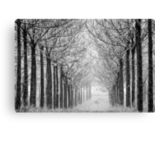 arranged in the fog Canvas Print