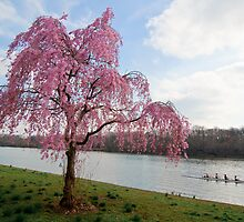 Spring at Fairmount Park by Eric Tsai