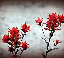 paintbrush wildflowers, Johnston's Ridge 3 by Dawna Morton