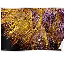Fireworks Seed Poster