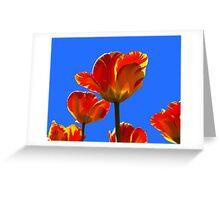 Electric Orange & Yellow Tulips Greeting Card