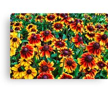 Yellow and Red Black-Eyed Susan Flowers Canvas Print