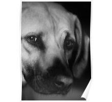 Canine Concerns Poster