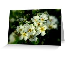 DEAD PEAR TREE BLOSSOMS Greeting Card