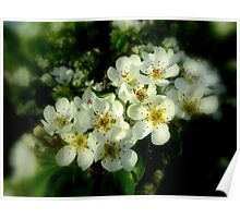 DEAD PEAR TREE BLOSSOMS Poster