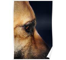 Canine Concerns #3 Poster