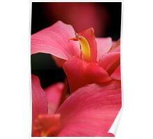 Fiery Canna Poster