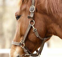 Beautiful Horse Head by Junec