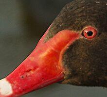 Black Swan by Paul Chubb