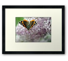 All Aflutter al Fresco Framed Print