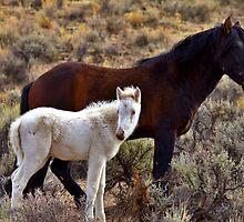 Rare Wild White Foal by SB  Sullivan