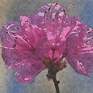 spring flowers - van dusen botanical gardens by Kathryn  Young