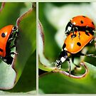 Ladybugs April 2012 by Betsy  Seeton