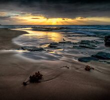 Turimetta Rays by Ian English