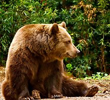 Brown Bear Bearly Awake by Matt Hill