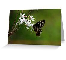 Black Swallowtail on Wild Azalia Greeting Card