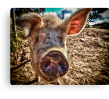 I oink, therefore I am Canvas Print
