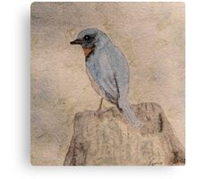 Winter Bluebird Canvas Print