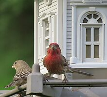 House Finch and song sparrow Enjoying Breakfast  by Ron Russell