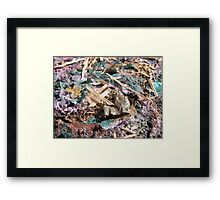 BUTTERFLY ~ 45 NO CROWN Framed Print