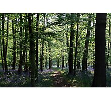 Bluebell Dream Photographic Print